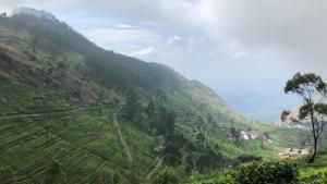 Plantacja i fabryka herbaty na Sri Lance [przebitki]