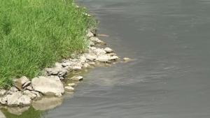 Niski poziom wody w Wiśle w Warszawie - 2020 [przebitki]