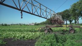 Uprawy, pola, sady - czerwiec [przebitki]