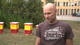 Przybywa pszczół w miastach. Produkują bardziej oryginalny i czystszy miód niż na terenach rolniczych News powiązane z DHL Polska