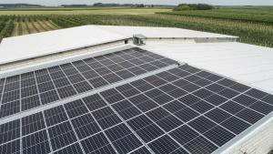 Energetyka słoneczna stała się opłacalnym biznesem. W tym roku obroty branży mają wzrosnąć o 25 proc. Wszystkie newsy