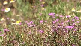 Badania naukowców potwierdzają, że w walce z wirusami skuteczne są ekstrakty roślinne. Mogą chronić także przed koronawirusem [DEPESZA] News powiązane z medycyna naturalna