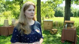 W Polsce z każdą sekundą umiera 105 pszczół. Ekolodzy zachęcają do stwarzania miejsc z pokarmem i schronieniem dla owadów