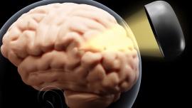 Urządzenia ubieralne będą wykorzystywane w leczeniu chorób neurologicznych, takich jak parkinson czy epilepsja. Naukowcy opracowali nieinwazyjną metodę włączania i wyłączania poszczególnych neuronów [DEPESZA] News powiązane z genetyka mózgu
