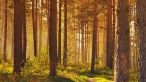 Dzień Dzikiej Flory, Fauny i Naturalnych Siedlisk. Ich ochrona to obowiązek nas