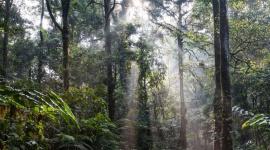 Dzień Różnorodności Biologicznej. Sprawdź, dlaczego należy dbać o każdy gatunek