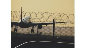 Ptak uderza w samolot co 24 minuty: czy powinieneś się obawiać?