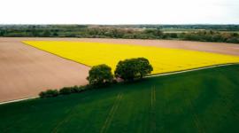 Stanowisko społeczne w sprawie polskiego rolnictwa