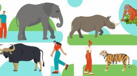 TikTok dołącza do Koalicji na rzecz zwalczania handlu dzikimi zwierzętami