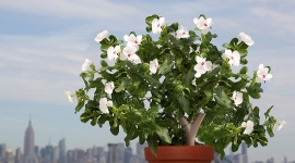 Parrot Flower Power: Twój osobisty ogrodniczy asystent! Biuro prasowe