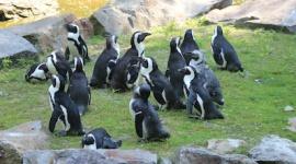 Budujemy zimowy domek z basenem dla pingwinów tońców