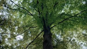 Chrońmy lasy, aby zachować różnorodność biologiczną i powstrzymać zmianę klimatu