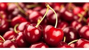 Owoce sezonowe – czereśnie i wiśnie