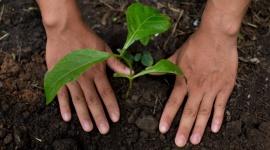 Nestlé i regeneracyjne systemy żywnościowe