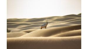 Emirates potwierdza swoje zaangażowanie w ochronę dzikiej przyrody i siedlisk