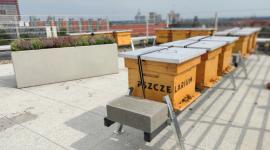 Miejska pasieka na dachu poznańskiej siedziby Żabki