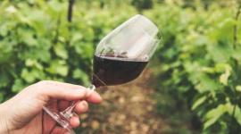 Wina ekologiczne – jakie certyfikaty?