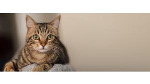 Kocie piękności po raz czwarty zawitają do Zielonych Arkad Biuro prasowe