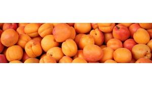 Owoce latem - brzoskwinia